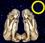 Mondkalender / Mondrhythmus: Neumond im Sternzeichen Zwilling
